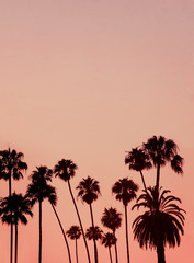 Tropical Background Image With Copy Space of Palm Trees Silhouetted at Sunset