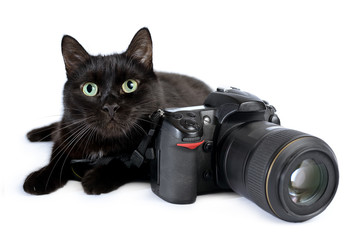Funny black cat is photographer with DSLR camera on white