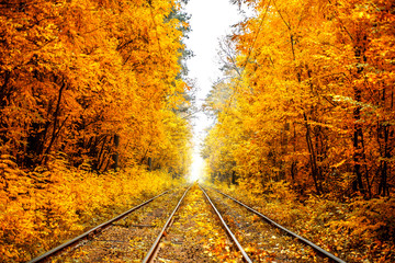 Railway leaving in the fog among the autumn forest.