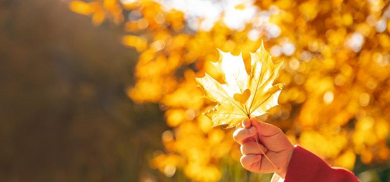 beautiful autumn leaves. Golden autumn. Selective focus.