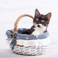 A playful, fluffy kitten in the basket. Isolated on a white background