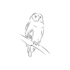 owl logo icon design template vector