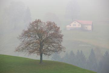 Novembernebel im Appenzell