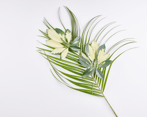 Tropical palm leaves on white background.
