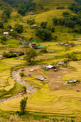 Beautiful scenery in the golden rice farm with streams and small villages.