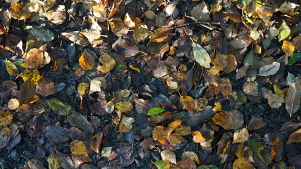 Brown and Yellow Autumn Dead Leaves on the Ground in a Forest