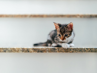 Cute Baby Cat Portrait On Home Stairs