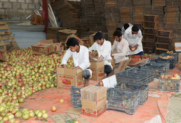 Workers pack pomegranates for export in Saada