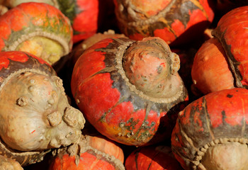 Pumpkins, out of some 400 kinds on display grown this season, are pictured at Franzlbauer farm in Hintersdorf