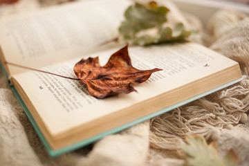 autumn still life. An open book is lying on a beige rug, autumnal fallen leaves are lying on the book.