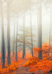 fairytale forest on misty morning