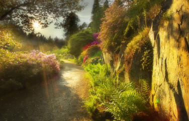 Way in the well-tended garden with color flowers and the sun on background, version with a soft filter