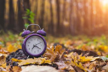 Autumn mood. Good morning. Nature wakes up. Change season. Back to school.