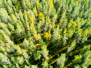 Aerial view of a green forest. Beautiful landscape. Clouds over the green forest. Aerial bird's eye trees. Aerial top view forest. Texture of forest view from above. Top view
