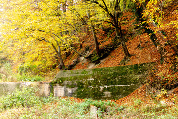 Small river surrounded with forest. Beautiful autumn colors. The environment of Kragujevac city in Serbia.