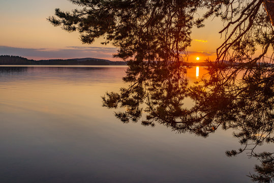 Colorful sunset and branch of pine tree