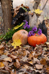 Autumn still life with orange pumpkins and leaves