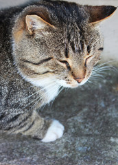 Cute Cat Palying Outdoors with Empty Copy Space on Summer Day. Adorable Small Brown Grey Cat Looking Away from Camera, Playing with Toys. Domestic Pet Outdoor Portrait of the Cat