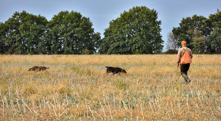 Photo sur Toile Chasse Red irish setter amd german wairehaired pointer dogs in field. Point a bird throw hunting.