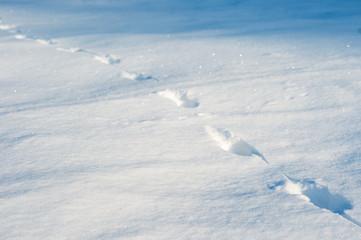 Footprints in the deep snow as texture..fresh animal tracks on a fresh snowdrift on a sunny day.
