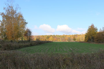 Autumn meadow is at the edge of the forest