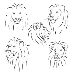 Set of black line lions on white background. Vector graphic icons animal.