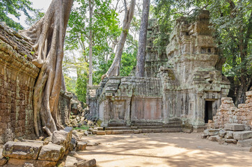 Roots of a spung running along the gallery of the Ta Prohm temple in Angkor Thom, Cambodia
