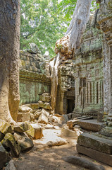 Roots of a spung running along the walls of the Ta Prohm temple in Angkor Thom, Cambodia