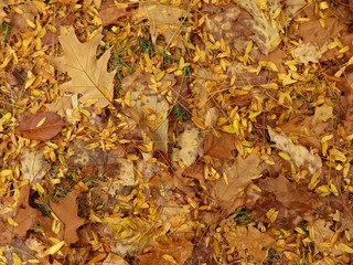 Autumn pattern - mixed yellow leaves on the ground - useful as background image