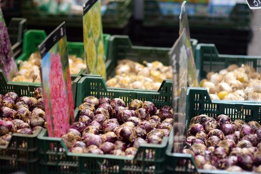 The famous Amsterdam flower market (Bloemenmarkt). Bulbs of hyacinths