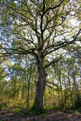 Savernake Forest - England's larger forest