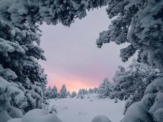Snowy landscape into the forest at burning sunrise