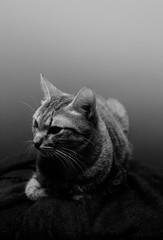 domestic cat sitting
