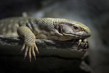 Close up of lizard on wood