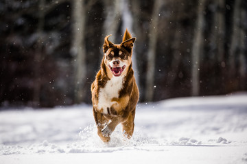 Happy dog in the snow!