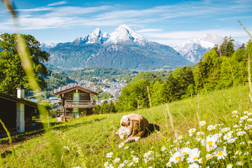 Idyllic alpine scenery with mountain cabin and cow grazing on green meadows in springtime
