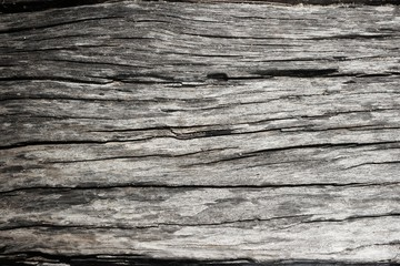Texture of Bark and sand.