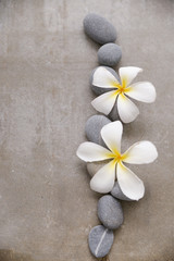 White orchid and stones close up.