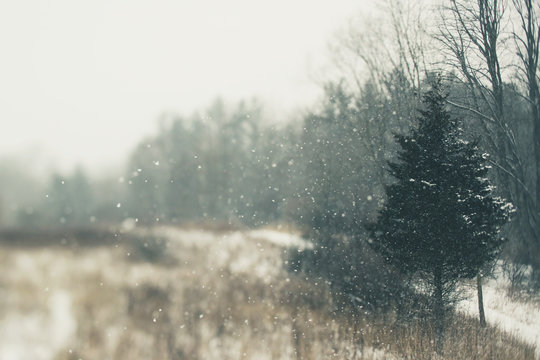 A Quiet Winter Field During A Snow Storm