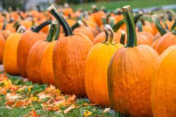 A row of pumpkins for sale at a pumpkin patch in the fall. Autumn leaves in the foreground.