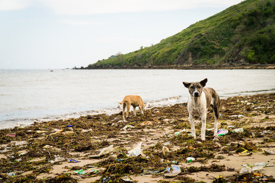 Stray dogs searching through a beach covered in garbage for food