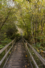 wooden bridge lead deep into the forest