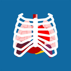 Rib cage and Internal organs. Human anatomy. Systems of man body and organs. medical systems. Lungs and Heart. Liver and Stomach. vector illustration