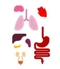 Human anatomy organs Internal set. Heart and brain. Liver and stomach. Esophagus and pancreas. Kidney and spleen. Lungs. Systems of man body and organs. medical systems