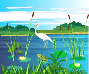 On the lake, white heron and frogg on the swamp plant, nature wildlife scene vector