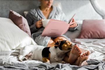 Dog Enjoying on Bed