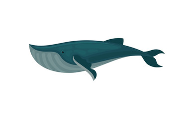 Flat vector icon of blue whale. Large marine mammal. Sea animal. Element for children book or mobile game
