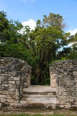 Kohunlich, Maya Ruins, Tree