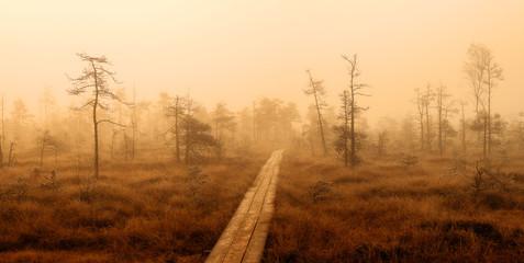 autumn misty swamp