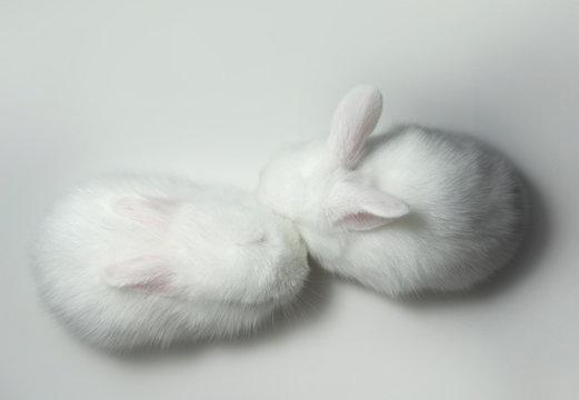 White little rabbits hug together